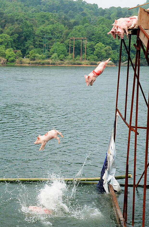 Chinese throwing pigs off bridge
