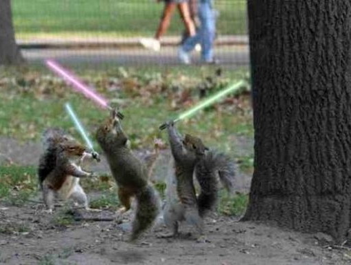 http://foreignerinformosa.typepad.com/photos/uncategorized/2007/06/11/jedi_squirrels.jpg