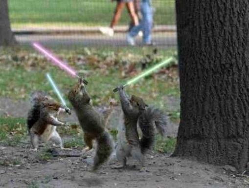 Jedi_squirrels