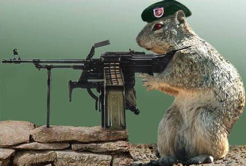 Commando_squirrel
