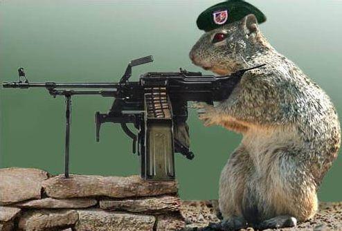 Commando_squirrel
