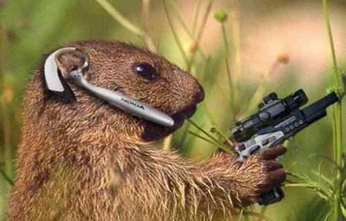 Commando_squirrel2